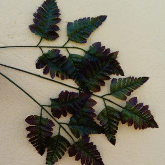 planta-vara-helecho-70-1